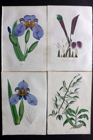 Paxton, Joseph 1835 Lot 4 HC Botanical Prints. Orchids