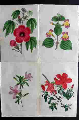 Paxton, Joseph 1835 Lot of 4 HCol Botanical Prints
