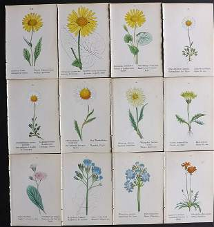 Weber, J. C. 1880 Lot of 12 Hand Col Botanical Prints