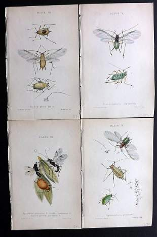 Buckton, George 1883 Lot of 4 Hand Col Insect Prints