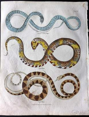 Buffon & Smellie C1821 Hand Color Print. Snakes