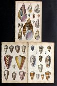 Goldsmith, Oliver 1850 Lot of 3 Hand Col Shell Prints