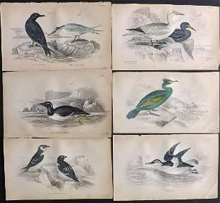 Jardine, William 1885 Lot of 6 HCol Bird Prints