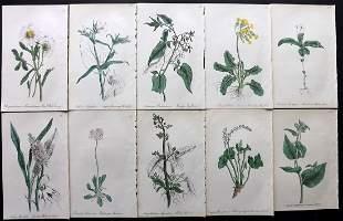 Hogg & Johnson C1870 Lot of 10 HCol Botanical Prints