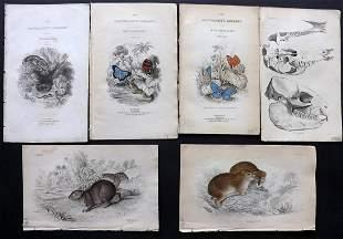 Jardine, William C1840 Mixed Lot of 6 Prints