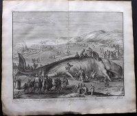 Le Clerc, Jean 1730 LG Print. Stranded Whale