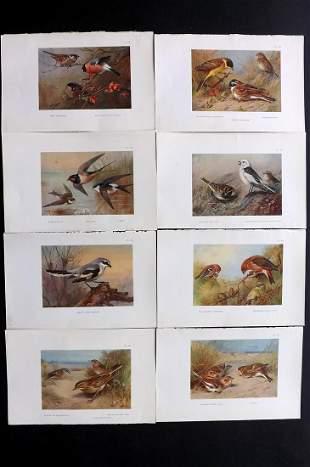 Thorburn, Archibald 1926 Lot of 8 Vintage Bird Prints