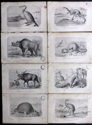 Hutchinson Extinct Monsters 1892 Lot of 8 Prints