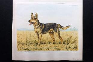 Wood, Paul C1935 Signed Dog Etching. Berger Allemand