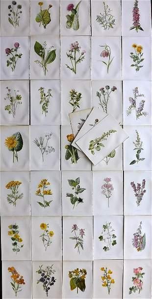 Hulme, Edward 1891 Lot of 38 Botanical Prints