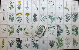 Hogg & Johnson C1870 Lot of 80 HCol Botanical Prints