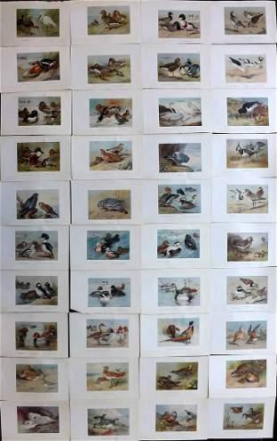 Thorburn, Archibald 1926 Lot of 40 Vintage Bird Prints