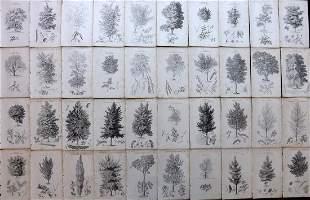 Loudon, John 1844 Lot of 40 Antique Tree Prints
