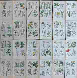 Moore, Thomas C1870 Lot of 24 HC Botanical Prints