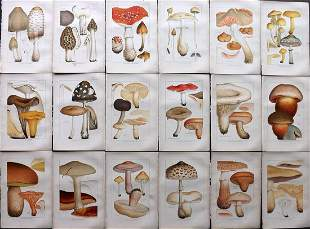 Cooke, Mordecai 1894 Lot of 18 Mushroom Prints