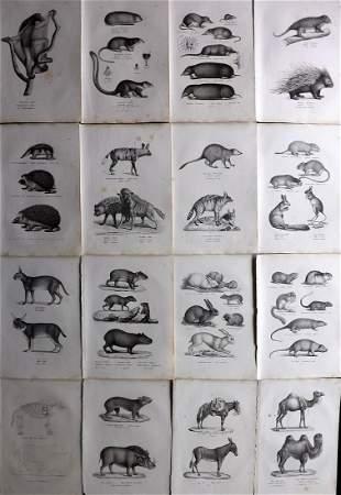 Schinz & Brodtmann 1827 Lot of 16 Folio Animal Prints