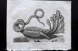 Wilkes, John 1806 Print. Seven Headed Hydra
