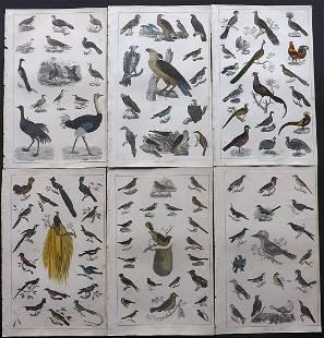 Goldsmith, Oliver 1847 Lot of 6 Hand Col Bird Prints