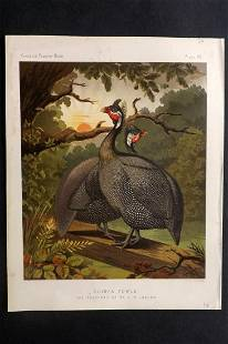 Ludlow & Wright C1880 Poultry Print. Guinea Fowls