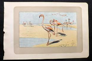 Mahler, P. 1907 Antique Bird Print. Flamingo