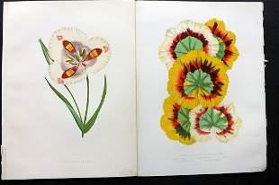 Hibberd, Shirley 1866 Pair of Botanical Prints