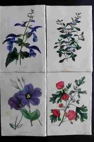 Paxton, Joseph 1830's Lot of 4 HCol Botanical Prints