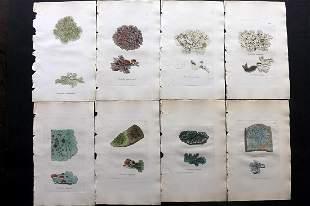 Sowerby, James C1840 Lot 8 HC Botanical Prints Lichens