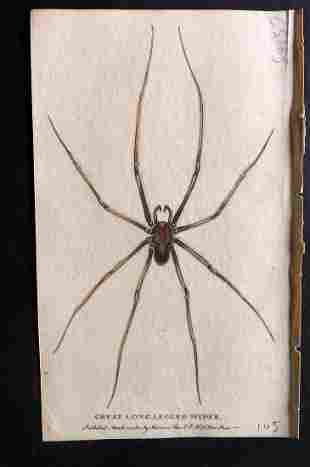 After George Edwards C1800 HC Print. Long Legged Spider