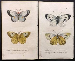 After George Edwards C1800 Pair of HC Butterfly Prints