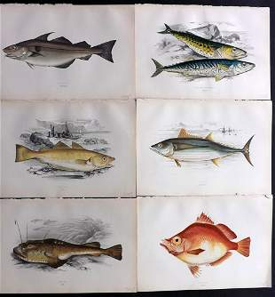 Couch, Jonathan 1878 Lot of 6 Fish Prints