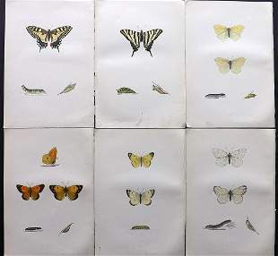 Morris, Francis 1870 Lot of 6 Hand Col Butterfly Prints
