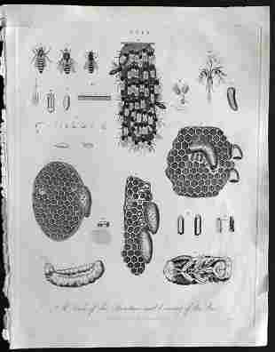 Wilkes, John 1796 Antique Print. Bees & Hives