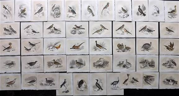 Bicknell, W. I. 1851 Lot of 44 Antique Bird Prints