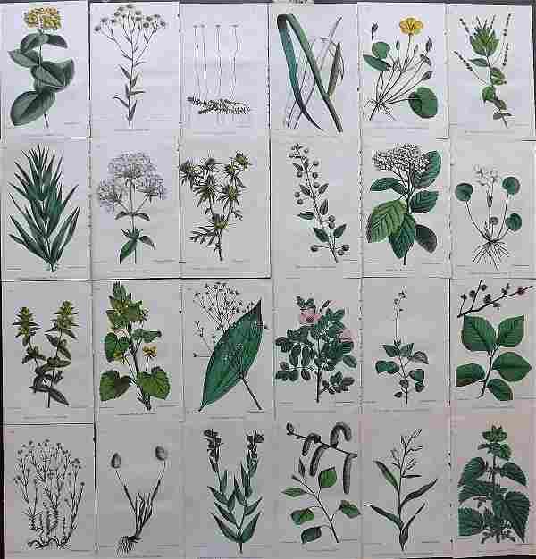 Hogg & Johnson C1870 Lot of 24 HCol Botanical Prints