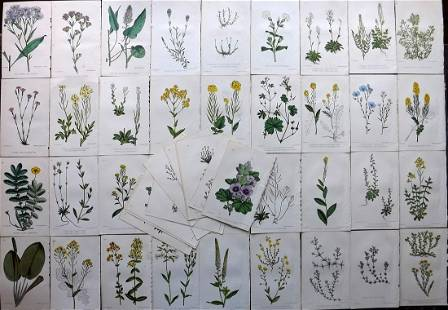 Hogg & Johnson C1870 Lot of 50 HCol Botanical Prints