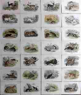 Lloyds's 1895 Lot of 28 Antique Prints. British Mammals
