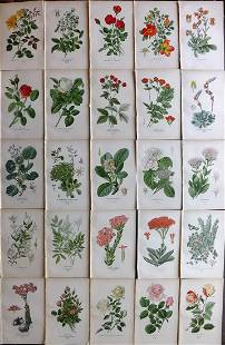 Step, Edward 1897 Lot of 25 Botanical Prints