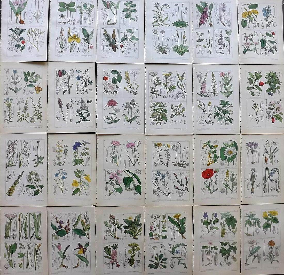 Moore, Thomas 1867 Lot of 24 HC Botanical Prints