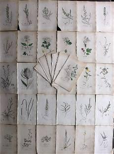 Sowerby, James C1840 Lot 40 Part HCol Botanical Prints
