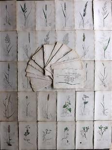 Sowerby, James C1840 Lot 80 Part HCol Botanical Prints