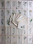 Sowerby, James C1840 Lot 160 Part HCol Botanical Prints