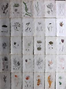 Sowerby, James C1840 Lot 30 Part HCol Seaweed Prints