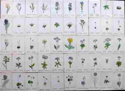 Weber, J. C. 1880 Lot of 50 Hand Col Botanical Prints