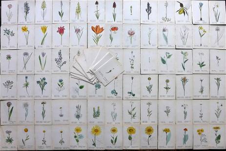 Weber, J. C. 1880 Lot of 100 Hand Col Botanical Prints