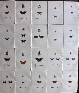 Morris, Francis 1870 Lot of 20 Hand Col Butterfly