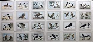 Mahler, P. 1907 Lot of 24 Antique Bird Prints