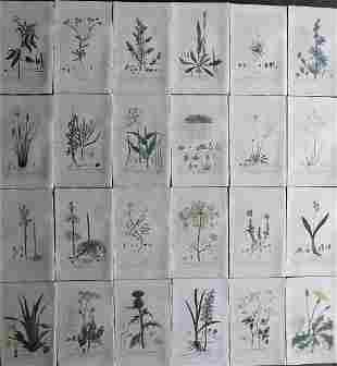 Baxter, William 1843 Lot of 24 Hand Col Botanical