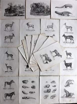 Schinz & Brodtmann 1827 Lot of 28 Folio Animal Prints