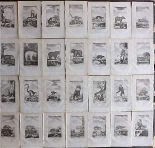 Goldsmith, Oliver 1779 Lot of 28 Natural History Prints