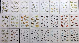 Lang, Henry 1884 Lot of 24 Butterfly Prints